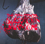 Meat & Bone - Jon Spencer / Blues Explosion